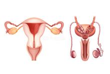 O. Génitaux - Tumeurs ovariennes